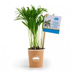 Plante dépolluante Apura