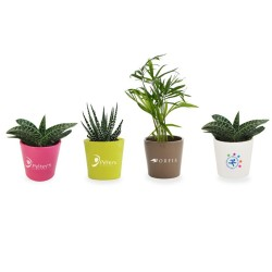 Mini plante dépolluante avec pot en céramique Aigny